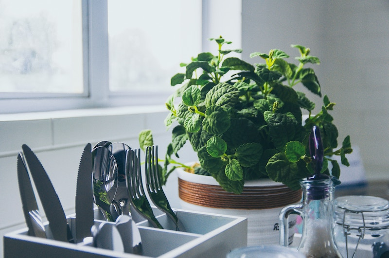 Mint plant in the kitchen