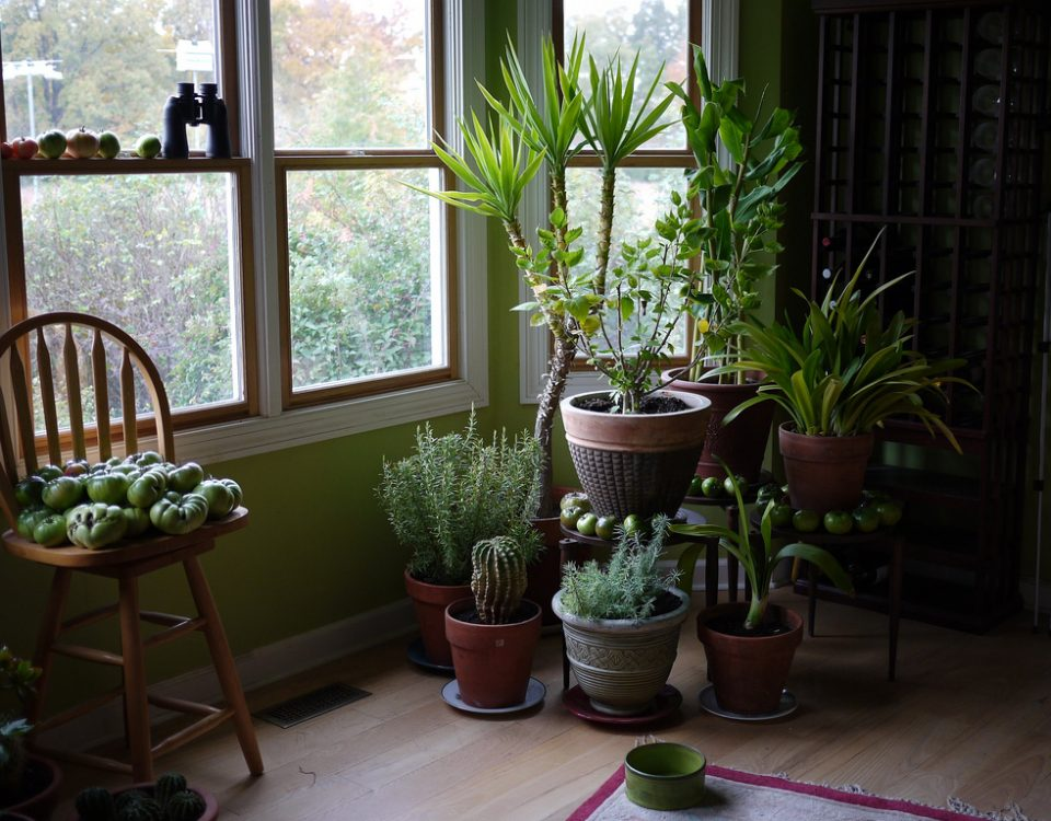 houseplants on the floor