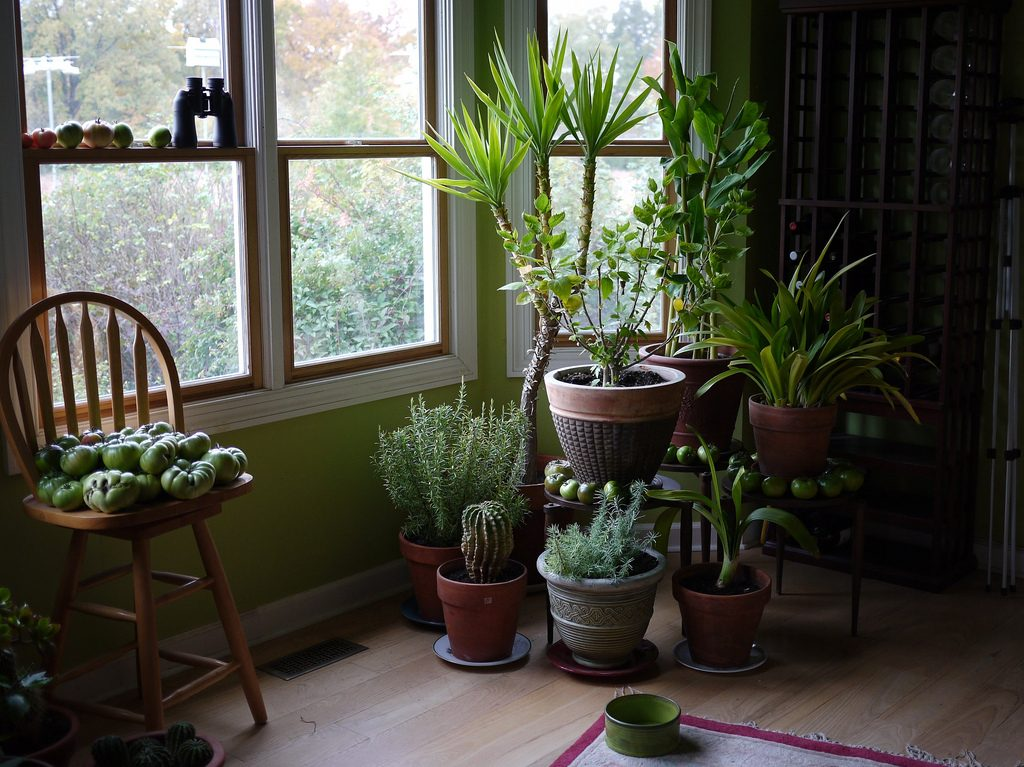 plants on the floor