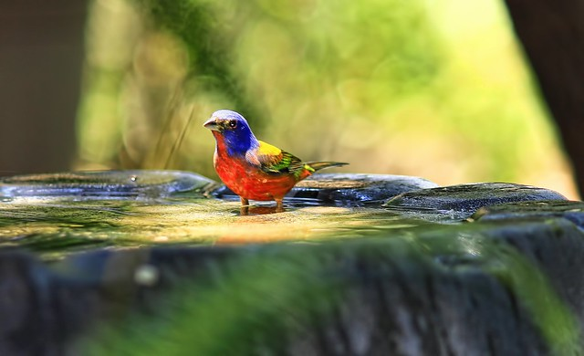 Bird friendly balcony or garden - Bird bath