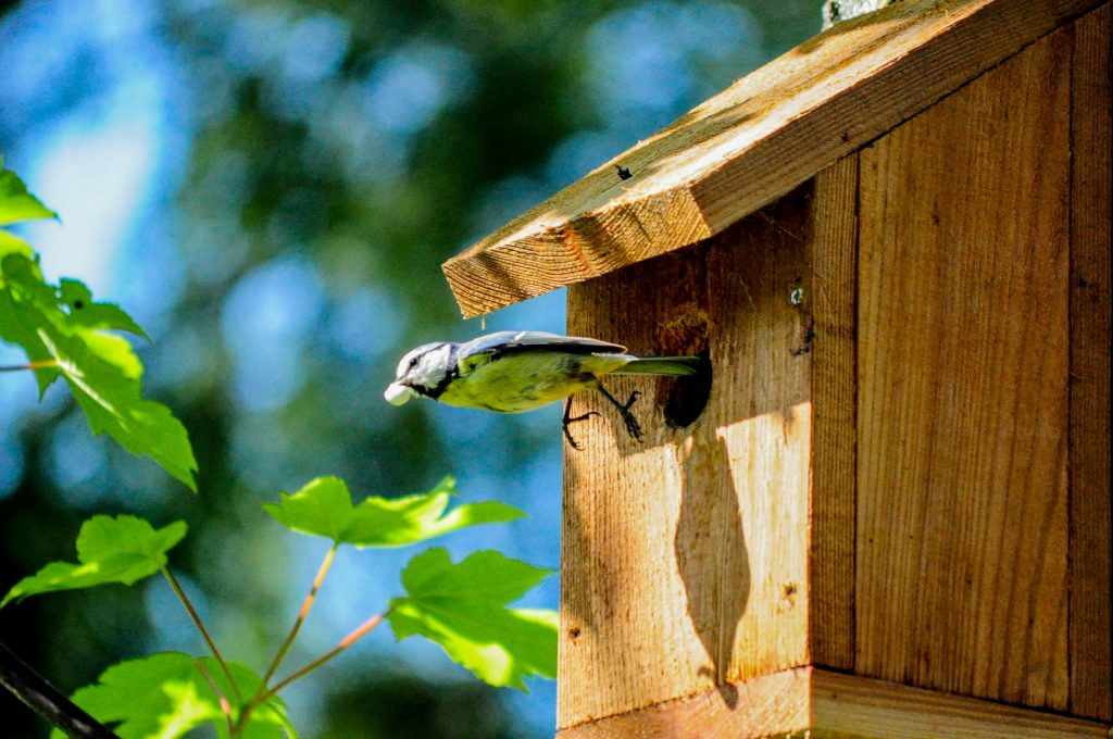 Bird friendly balcony or garden - bird house