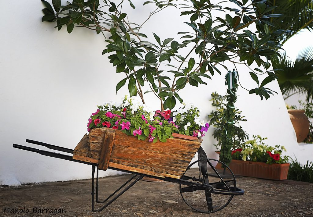 Practical and fine - Flowers in a wheelbarrow planter