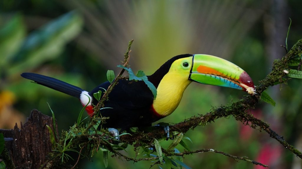 Solo holiday: Keel billed toucan Costa Rica bird