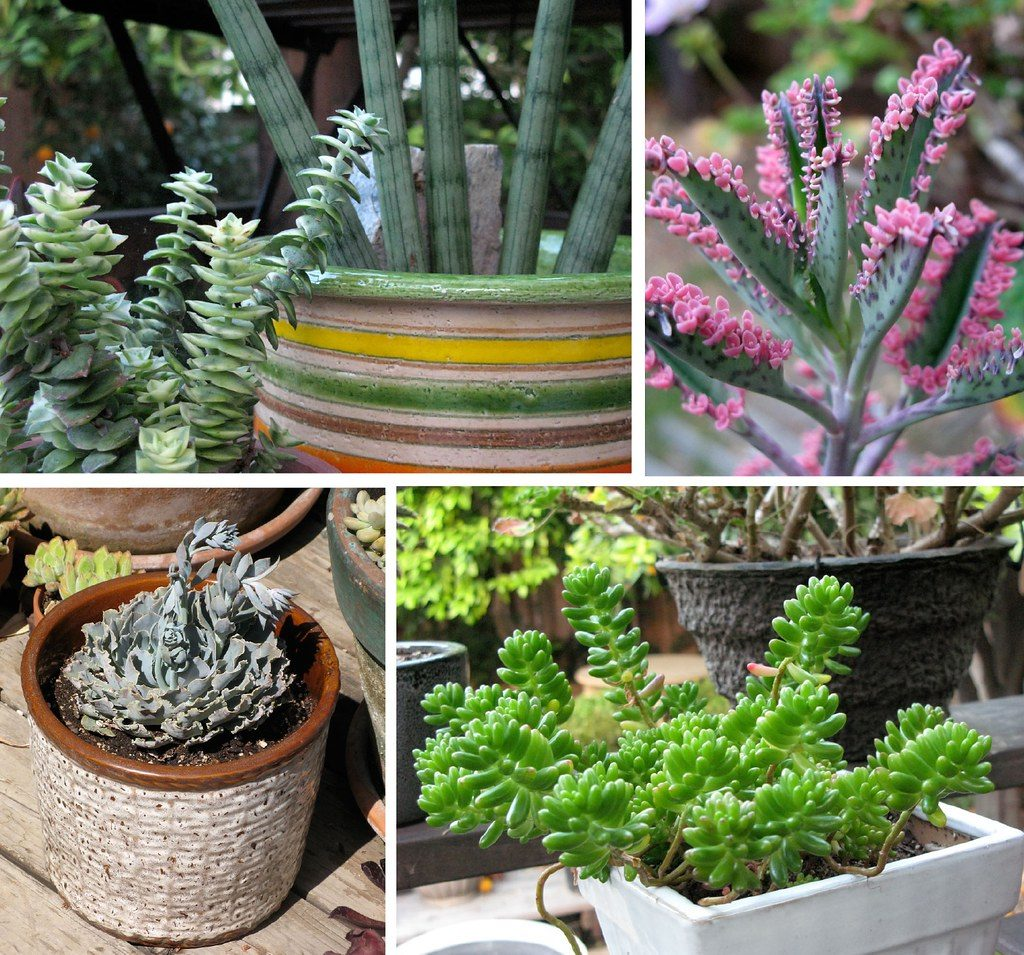 Practical and fine - potted succulent plants