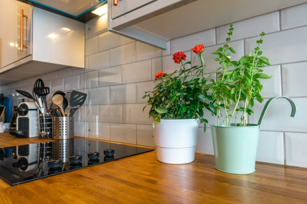 two houseplants in the kitchen