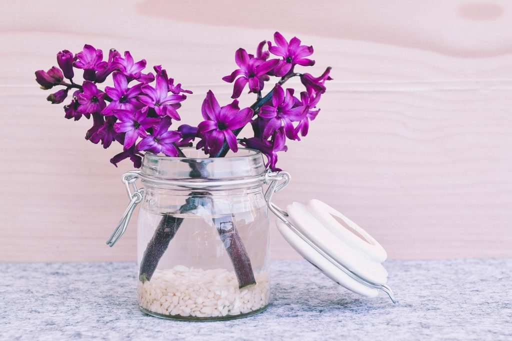 odor eliminators - odor remover hyacinth flower blossom bloom pink