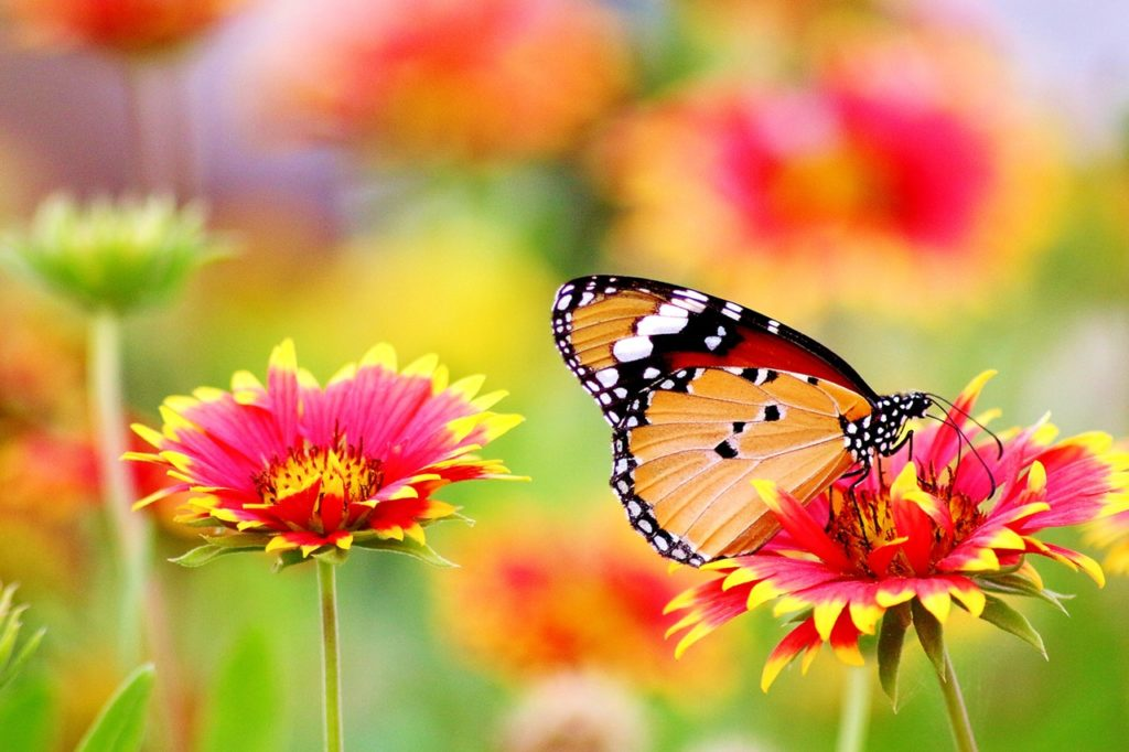 flower garden and a butterfly