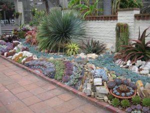 succulent garden outdoor plant