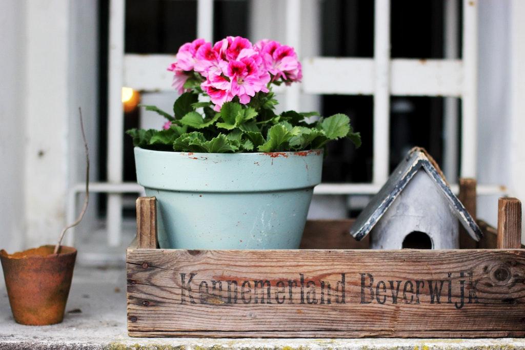 easy practical indoor plant