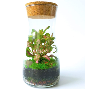 Handmade Clear Glass Terrarium Kit