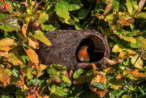 robin bird nester
