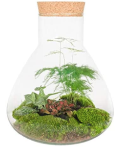 terrarium kit from botanicly