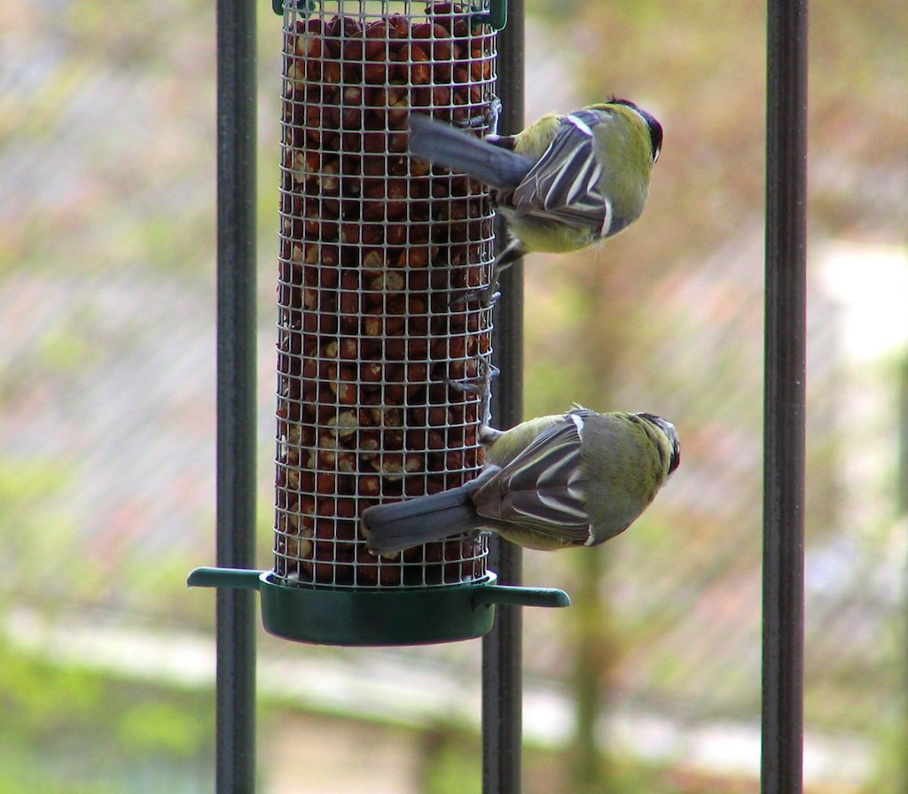 two birds on a bird feeder